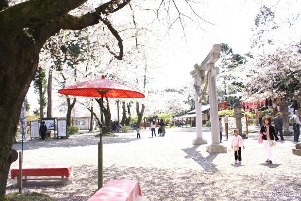 日本在住の外国人女性・白人女性について